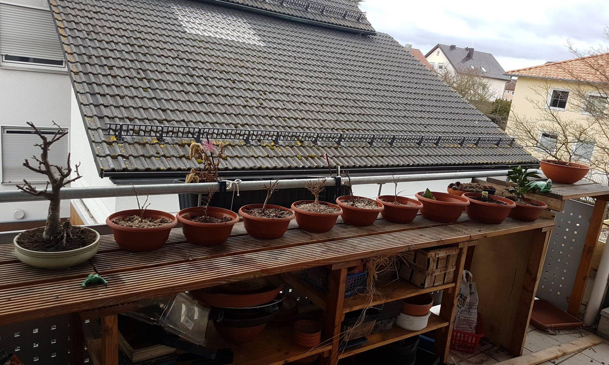 Bäume auf dem Balkon im Februar.