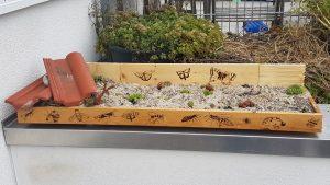 Der Steingartenkasten an Ort und Stelle, gefüllt mit Sand-Kies-Substrat und bepflanzt mit Sempervivum.