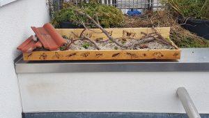 Das Totholz auf der Anpflanzung macht sie katzensicher.