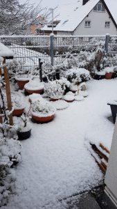 µHortus im Schnee. Weiße Hütchen auf den Pflänzchen.